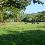 Daccombe meadow