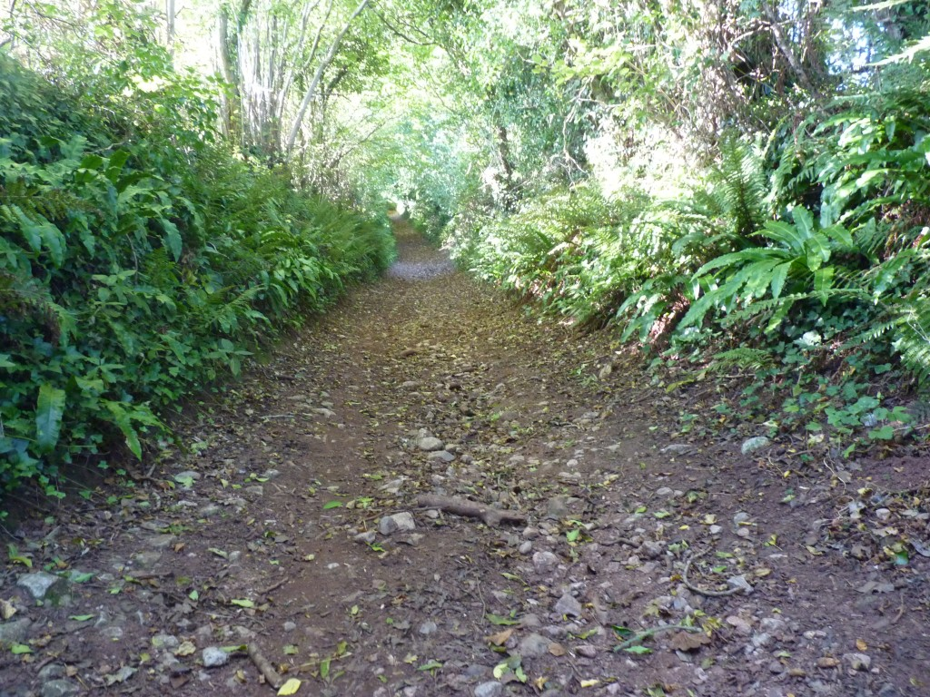 Churchway track, Coffinswell